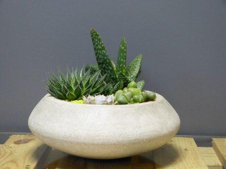 Coupe de succulente pour l'intérieur