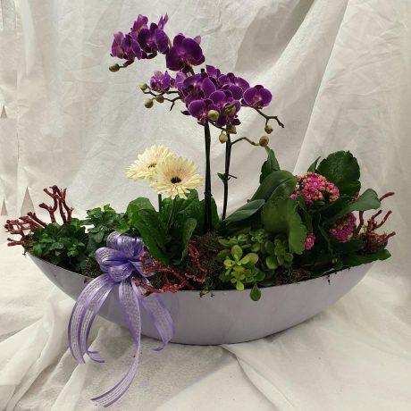 Arrangement en plante d'intérieur