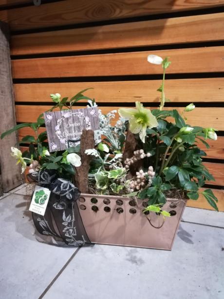 coupe de plante nature
