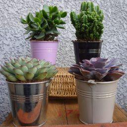 Succulente pot de 12 cm