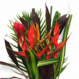 fleur tropicale exotique